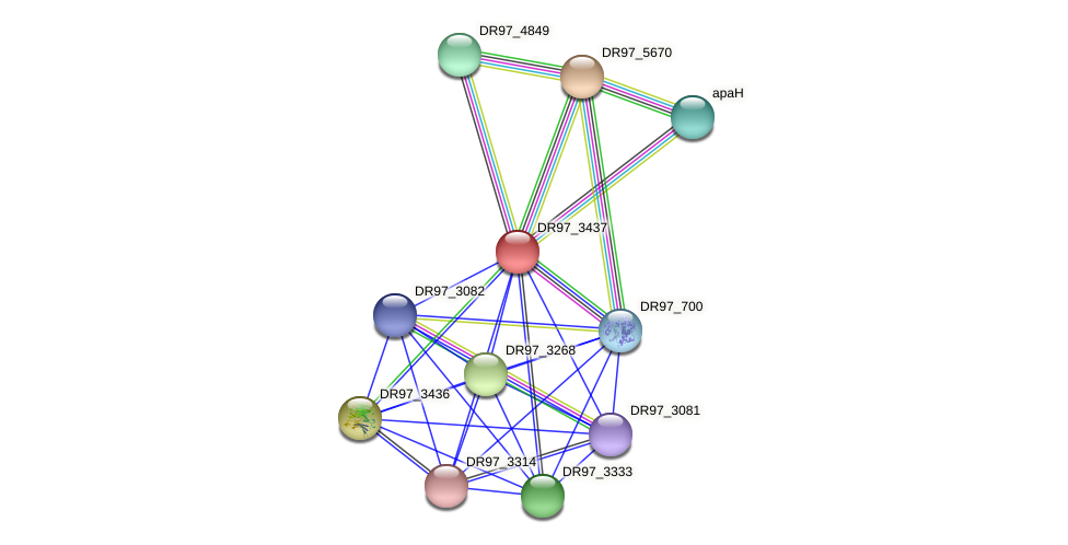 DR97_3437 protein (Pseudomonas aeruginosa) - STRING interaction network