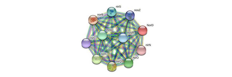 norD protein (Pseudomonas aeruginosa) - STRING interaction network