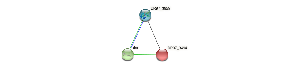 DR97_3494 protein (Pseudomonas aeruginosa) - STRING interaction network