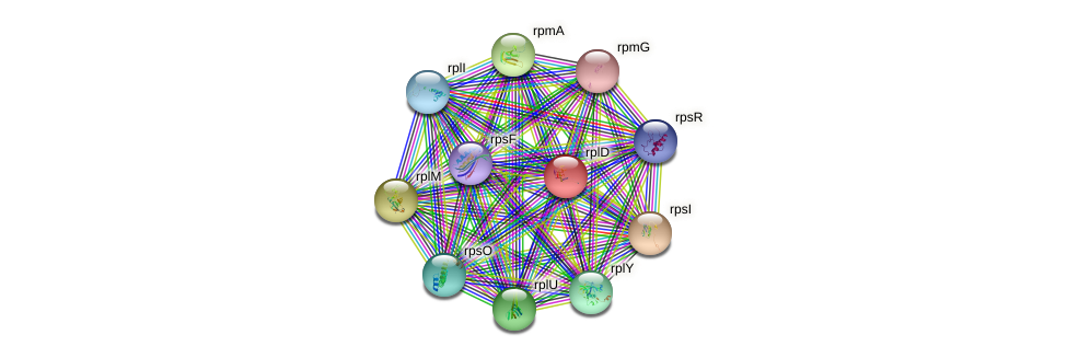 rplD protein (Pseudomonas aeruginosa) - STRING interaction network