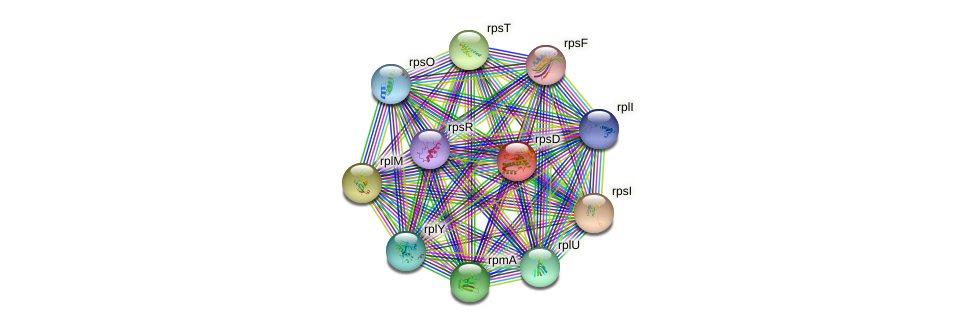 rpsD protein (Pseudomonas aeruginosa) - STRING interaction network