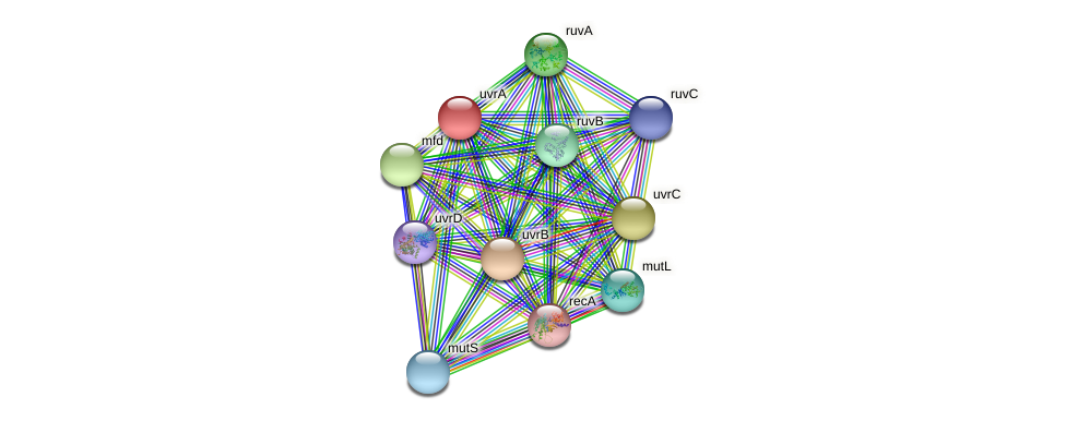 uvrA protein (Pseudomonas aeruginosa) - STRING interaction network