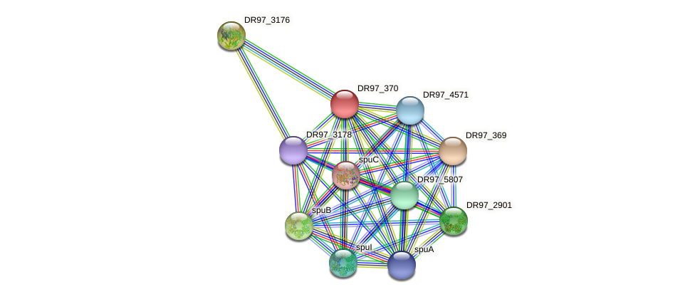 DR97_370 protein (Pseudomonas aeruginosa) - STRING interaction network
