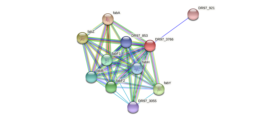 DR97_3766 protein (Pseudomonas aeruginosa) - STRING interaction network
