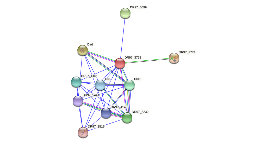 DR97_3773 protein (Pseudomonas aeruginosa) - STRING interaction network