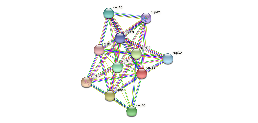cupB1 protein (Pseudomonas aeruginosa) - STRING interaction network