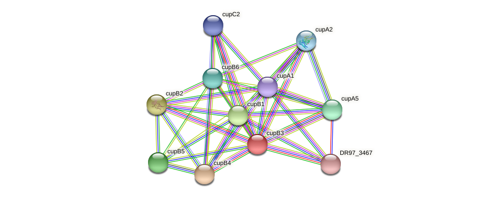 cupB3 protein (Pseudomonas aeruginosa) - STRING interaction network