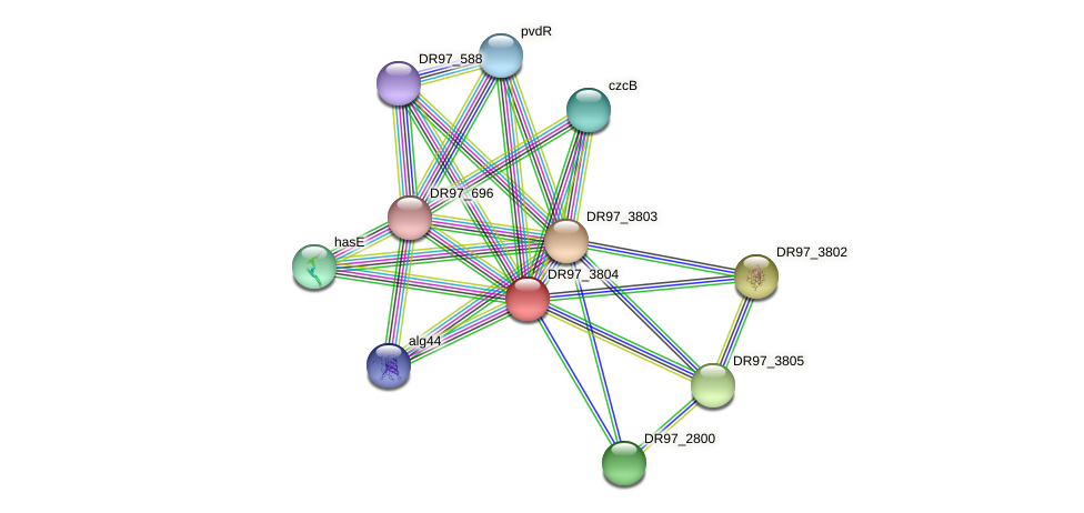 DR97_3804 protein (Pseudomonas aeruginosa) - STRING interaction network