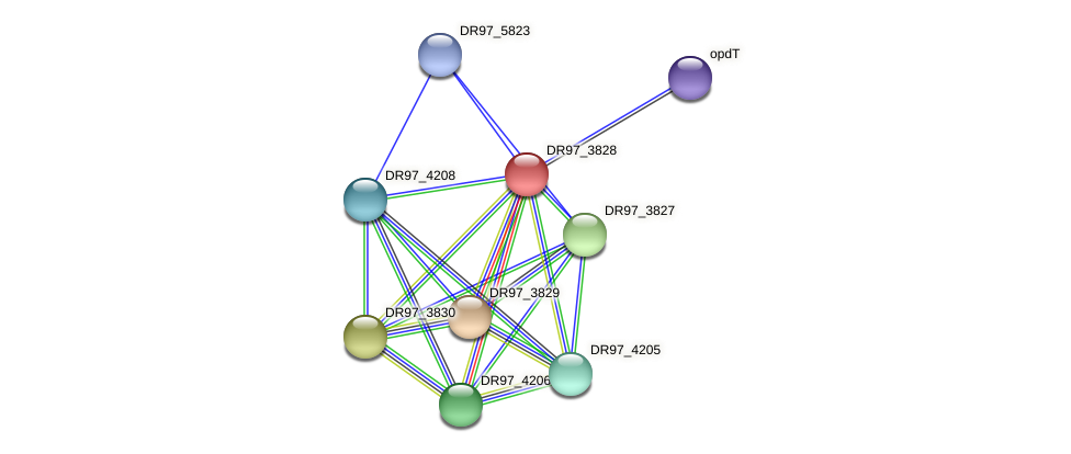 DR97_3828 protein (Pseudomonas aeruginosa) - STRING interaction network