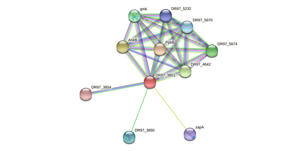 DR97_3851 protein (Pseudomonas aeruginosa) - STRING interaction network