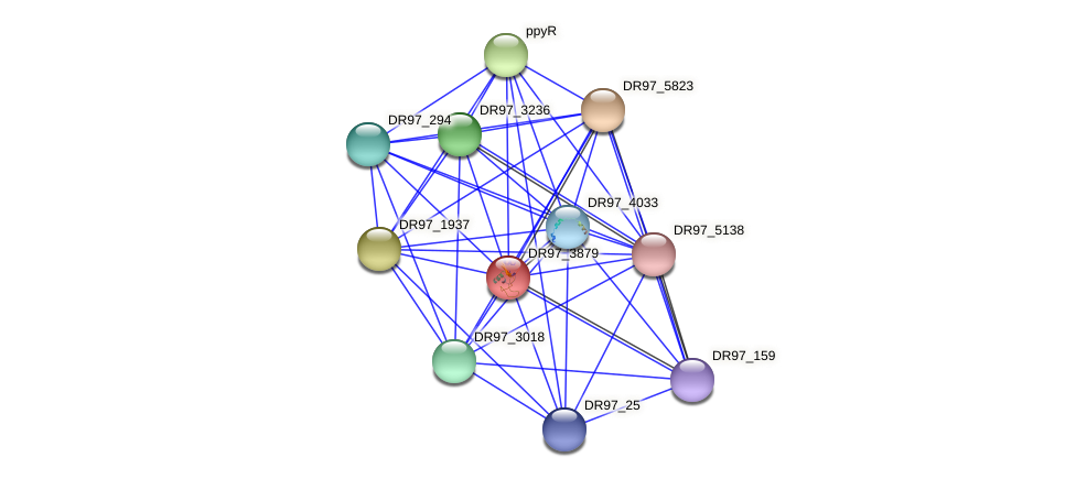 DR97_3879 protein (Pseudomonas aeruginosa) - STRING interaction network