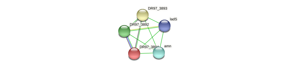 DR97_3894 protein (Pseudomonas aeruginosa) - STRING interaction network