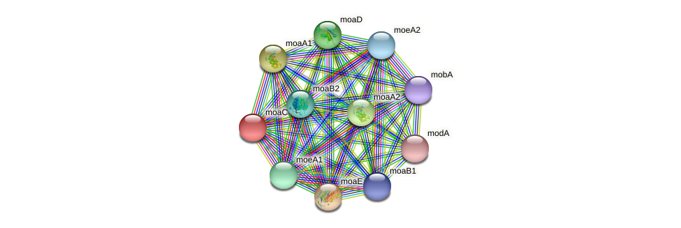moaC protein (Pseudomonas aeruginosa) - STRING interaction network