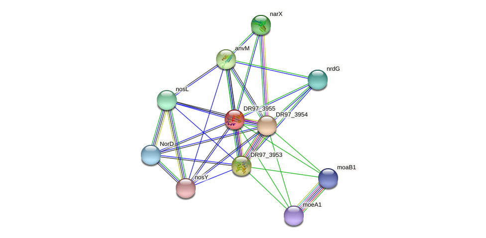 DR97_3955 protein (Pseudomonas aeruginosa) - STRING interaction network