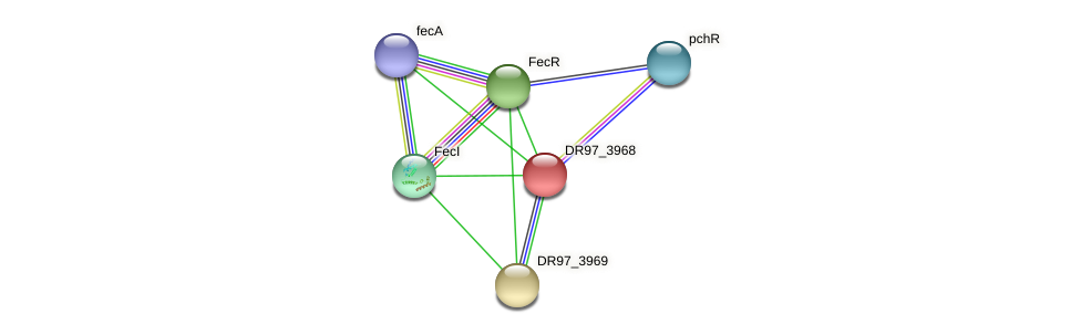 DR97_3968 protein (Pseudomonas aeruginosa) - STRING interaction network