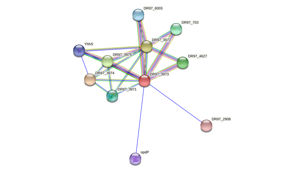 DR97_3973 protein (Pseudomonas aeruginosa) - STRING interaction network