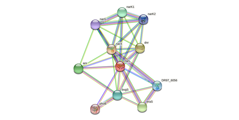 narL protein (Pseudomonas aeruginosa) - STRING interaction network