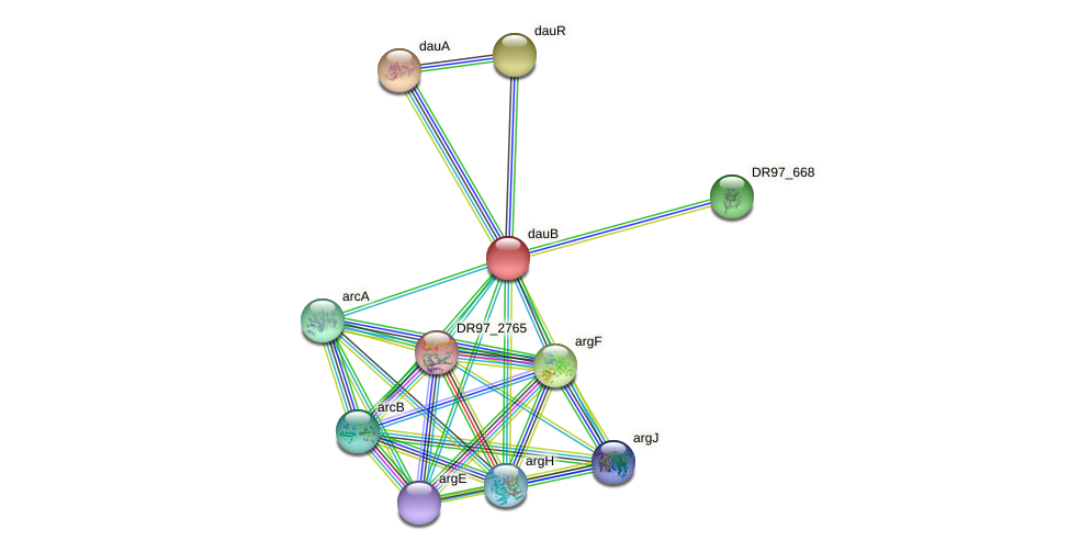 DR97_4004 protein (Pseudomonas aeruginosa) - STRING interaction network