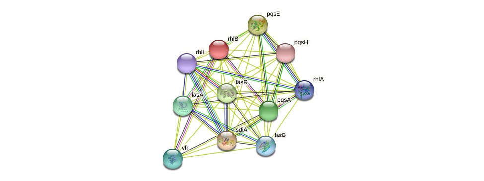 rhlB protein (Pseudomonas aeruginosa) - STRING interaction network