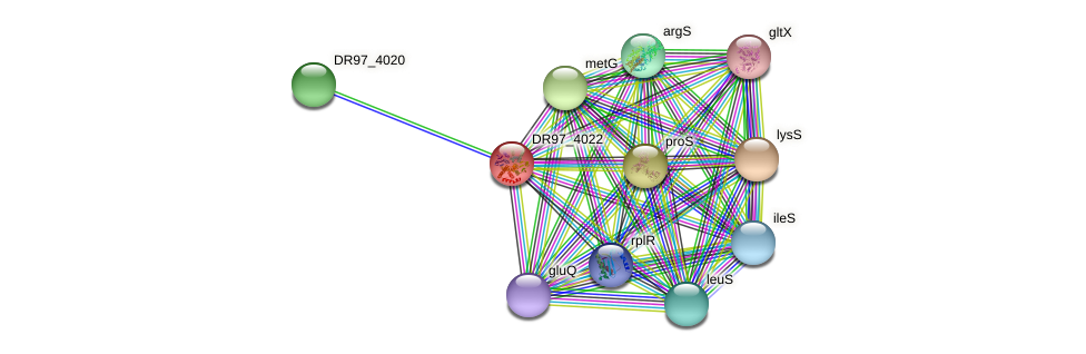 DR97_4022 protein (Pseudomonas aeruginosa) - STRING interaction network