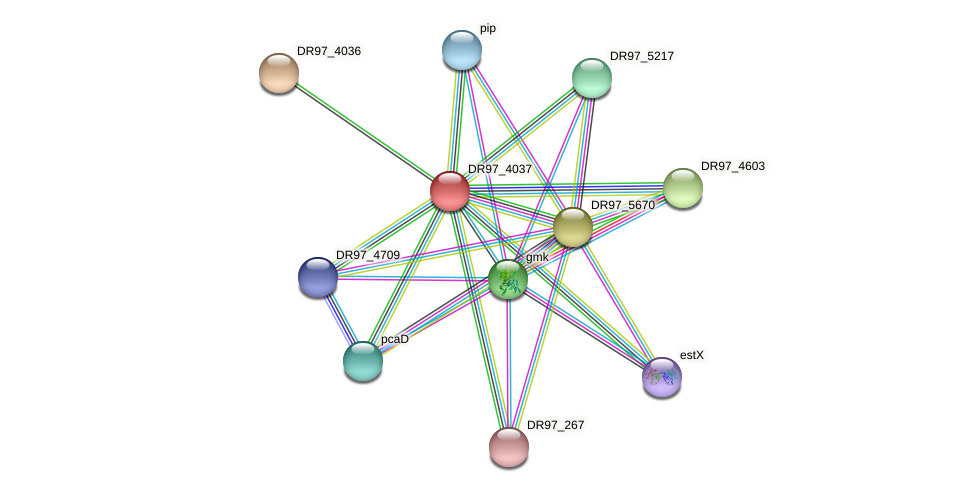 DR97_4037 protein (Pseudomonas aeruginosa) - STRING interaction network