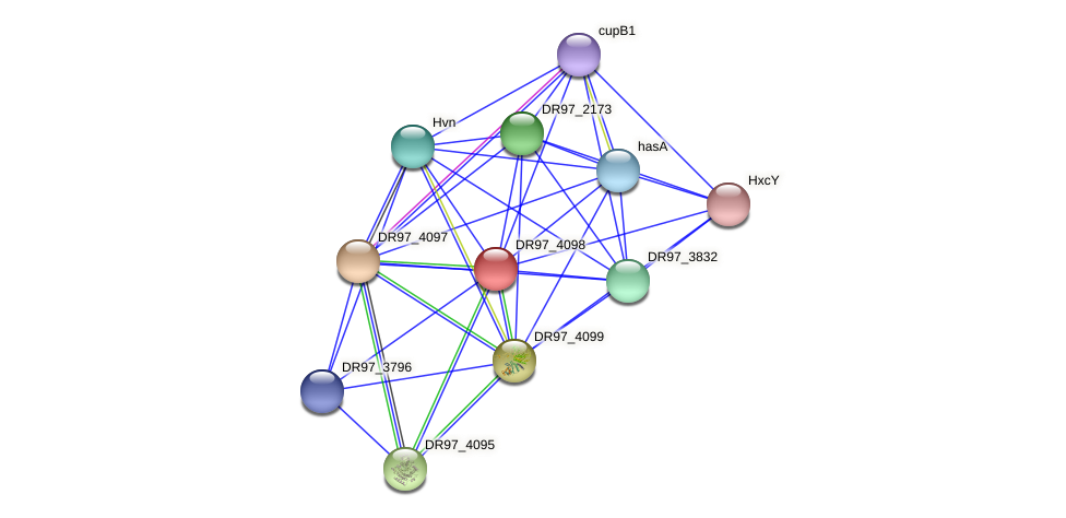 DR97_4098 protein (Pseudomonas aeruginosa) - STRING interaction network