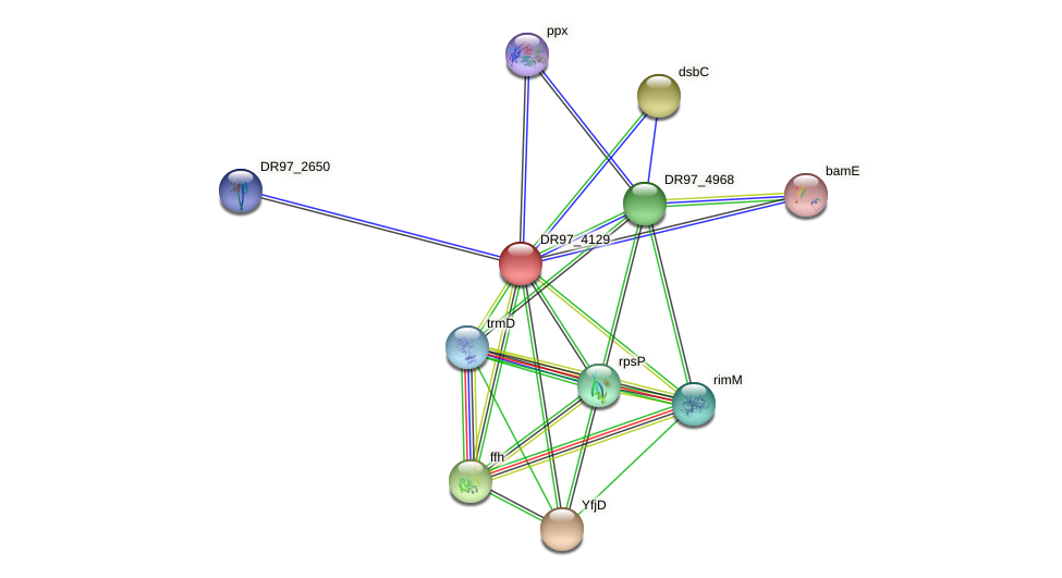 DR97_4129 protein (Pseudomonas aeruginosa) - STRING interaction network