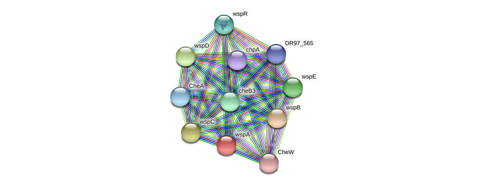 wspA protein (Pseudomonas aeruginosa) - STRING interaction network