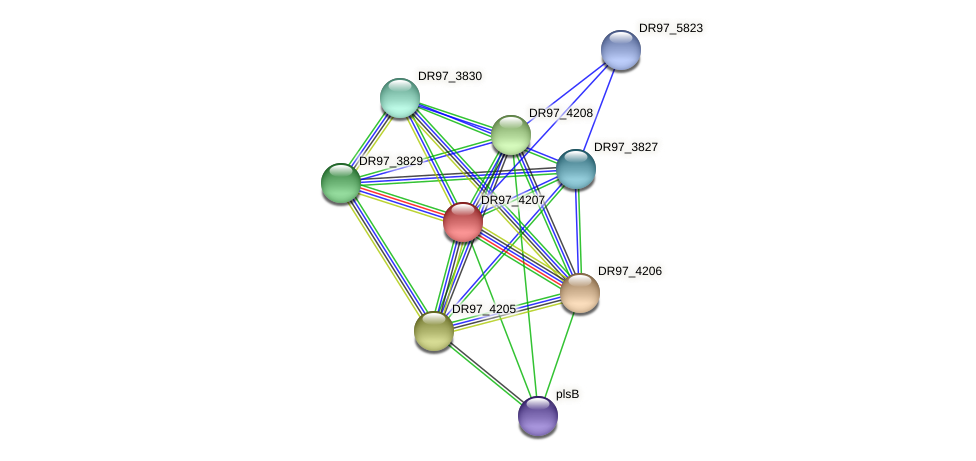 DR97_4207 protein (Pseudomonas aeruginosa) - STRING interaction network