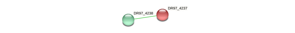 DR97_4237 protein (Pseudomonas aeruginosa) - STRING interaction network