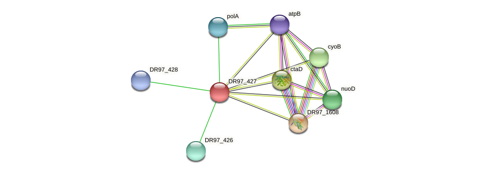 DR97_427 protein (Pseudomonas aeruginosa) - STRING interaction network