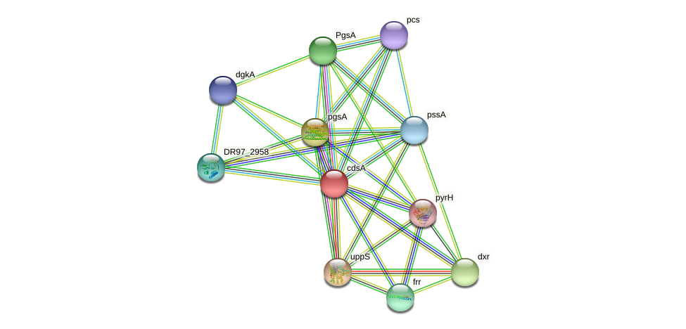DR97_4288 protein (Pseudomonas aeruginosa) - STRING interaction network