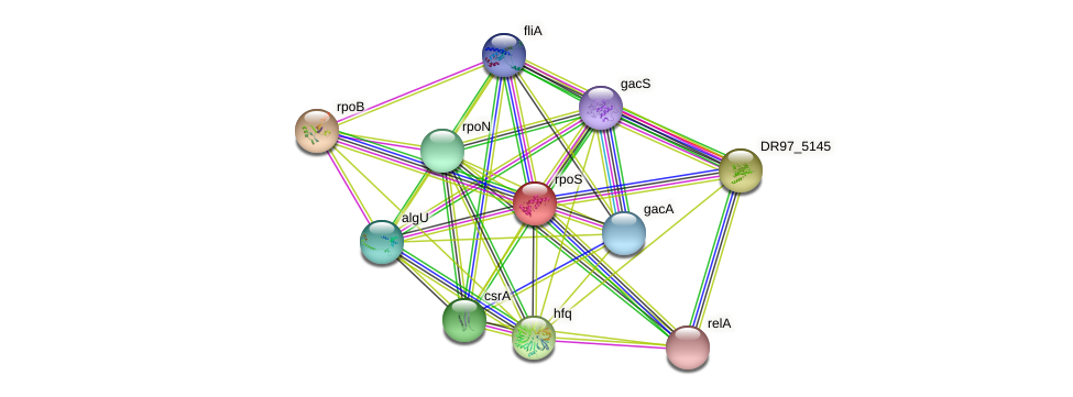 rpoS protein (Pseudomonas aeruginosa) - STRING interaction network