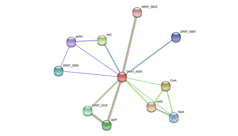 DR97_4320 protein (Pseudomonas aeruginosa) - STRING interaction network
