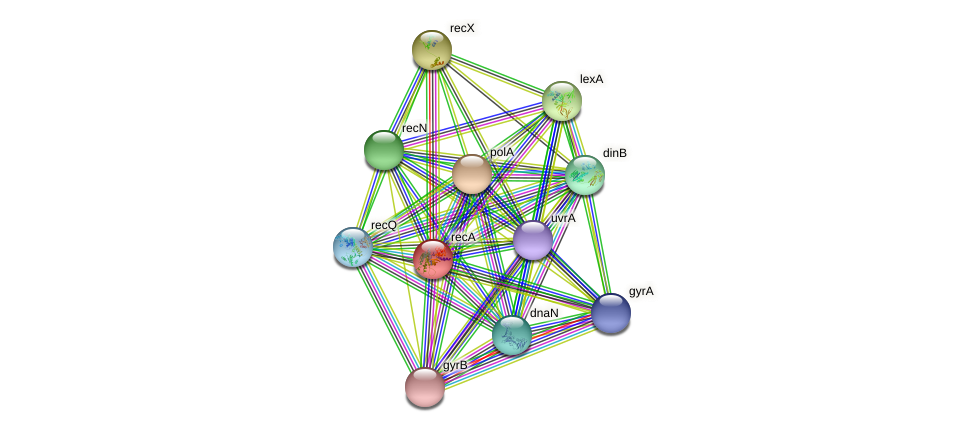 recA protein (Pseudomonas aeruginosa) - STRING interaction network