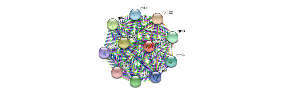 ykgO protein (Pseudomonas aeruginosa) - STRING interaction network