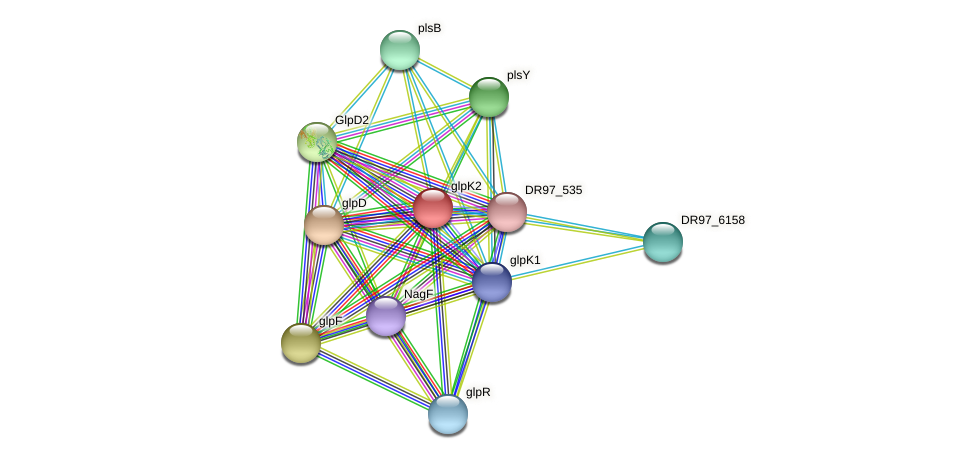 glpK1 protein (Pseudomonas aeruginosa) - STRING interaction network