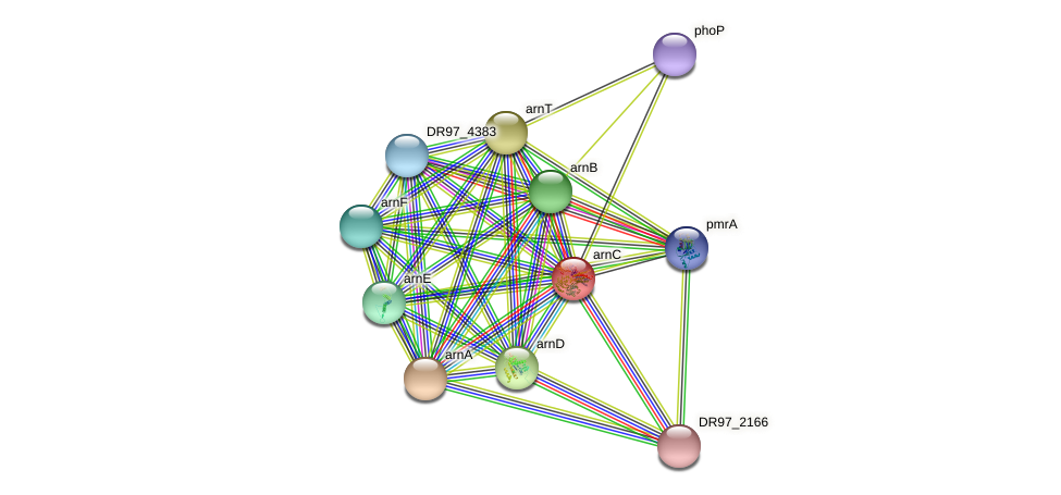 arnC protein (Pseudomonas aeruginosa) - STRING interaction network