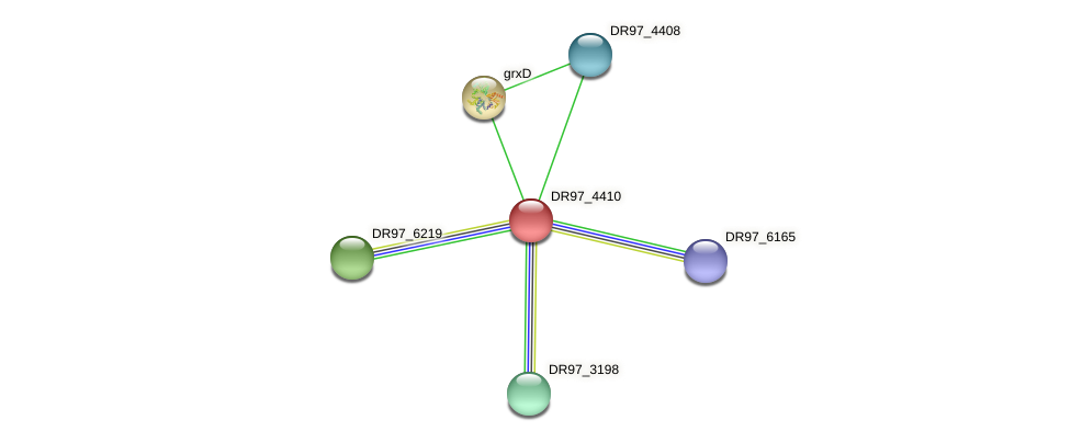 DR97_4410 protein (Pseudomonas aeruginosa) - STRING interaction network