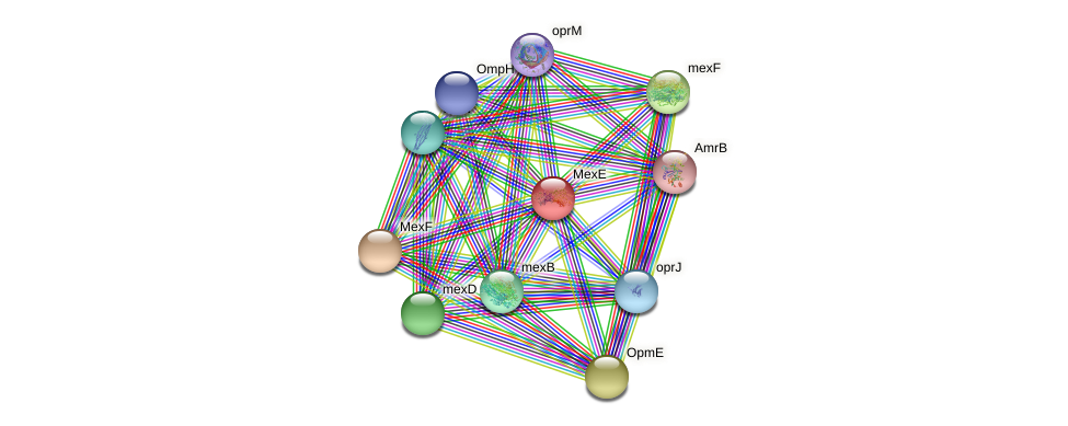 mexP protein (Pseudomonas aeruginosa) - STRING interaction network