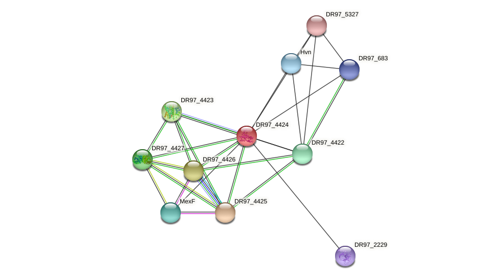 DR97_4424 protein (Pseudomonas aeruginosa) - STRING interaction network