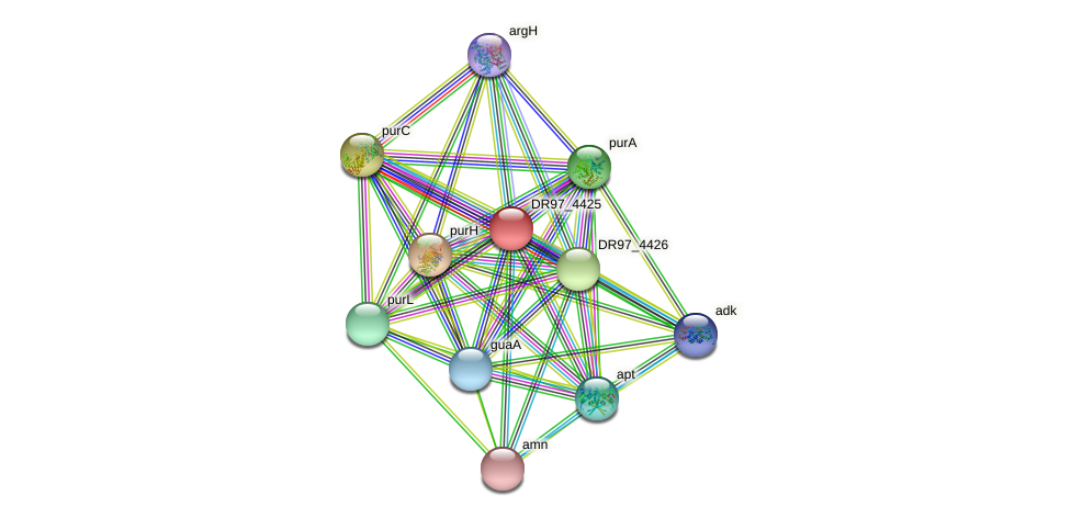 DR97_4425 protein (Pseudomonas aeruginosa) - STRING interaction network