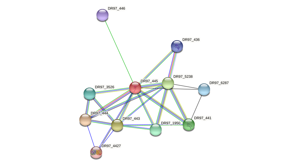 DR97_445 protein (Pseudomonas aeruginosa) - STRING interaction network