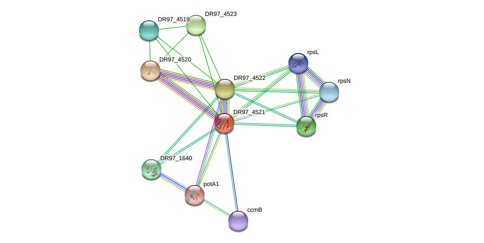 yhhJ_2 protein (Pseudomonas aeruginosa) - STRING interaction network