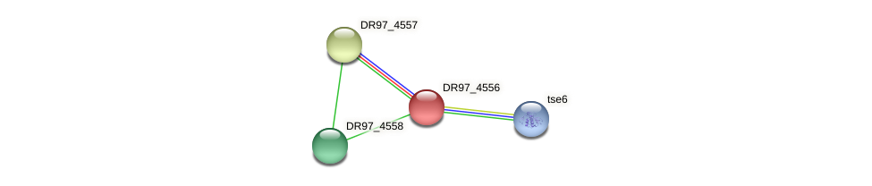 DR97_4556 protein (Pseudomonas aeruginosa) - STRING interaction network