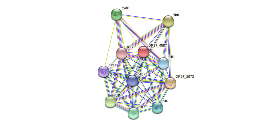 DR97_4587 protein (Pseudomonas aeruginosa) - STRING interaction network