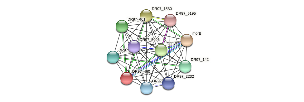 nemA5 protein (Pseudomonas aeruginosa) - STRING interaction network