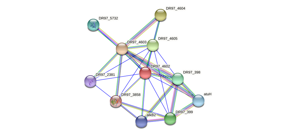 DR97_4602 protein (Pseudomonas aeruginosa) - STRING interaction network