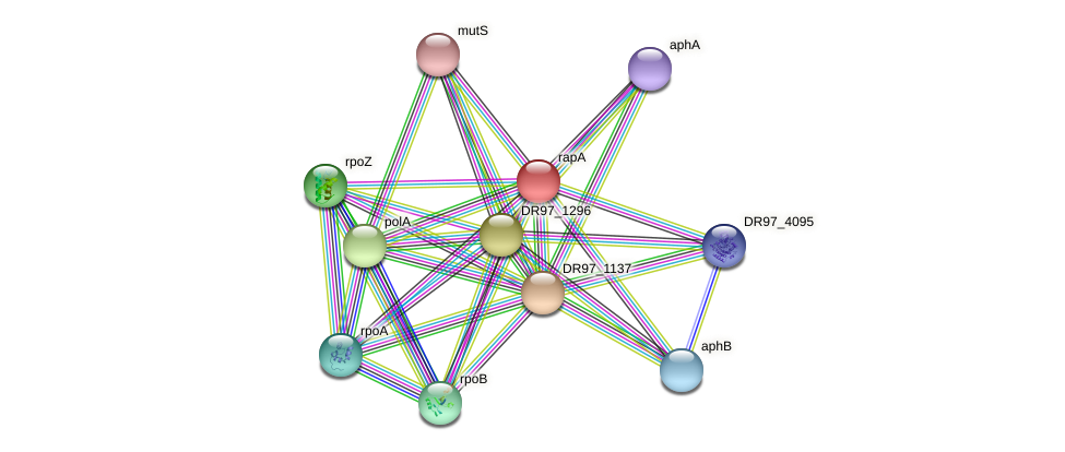 rapA protein (Pseudomonas aeruginosa) - STRING interaction network