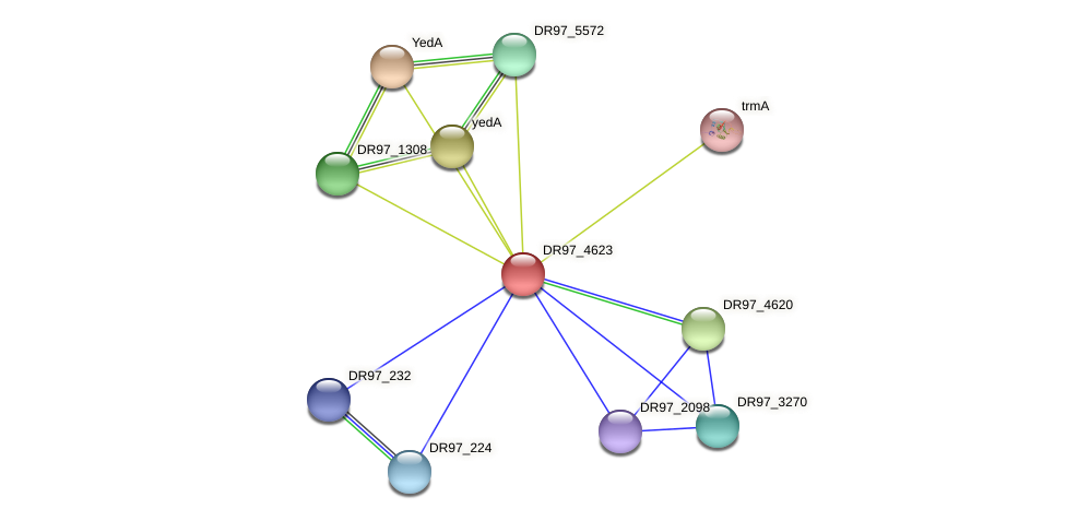 DR97_4623 protein (Pseudomonas aeruginosa) - STRING interaction network